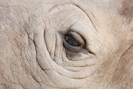 Rhino eye photo