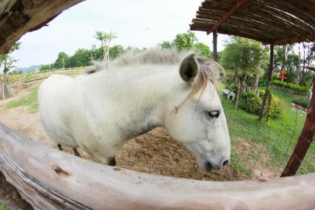White horse fisheye Photo