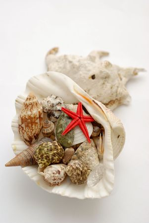 A bunch of shells and marine creatures