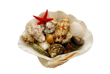 Various seashells and a starfish contained in a larger shell. Stock Photo