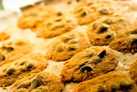 Homemade chocolate chip cookies fresh from the oven