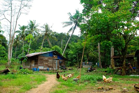 A dilapidated wooden hut in a rural Malaysian village