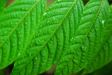 A closeup of leaves with water droplets after the rain Stock Photo