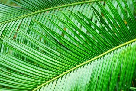 A closeup shot of leaves from a palm tree