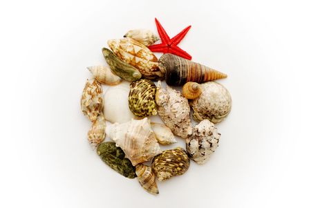 An assorted collection of seashells and marine animals, contained in a larger shell Stock Photo