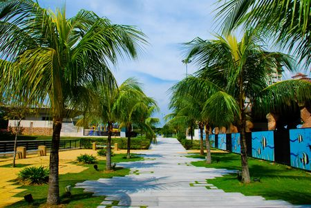 A walkway in in building area lined with palm trees Stock Photo