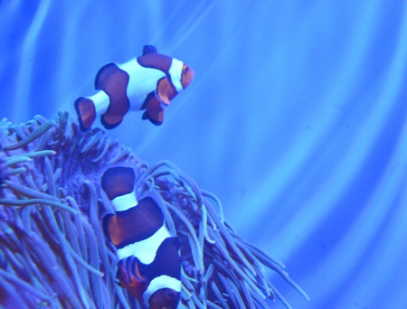 nemo: Nemo in real life