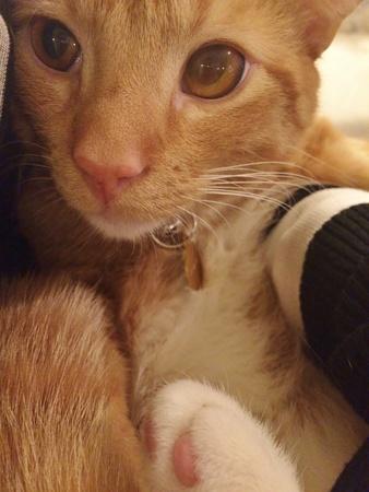 eye: Cat