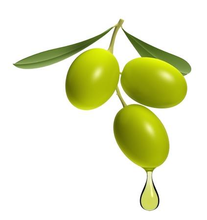 rama de olivo: Rama de olivo con gota de aceite aislada sobre fondo blanco.
