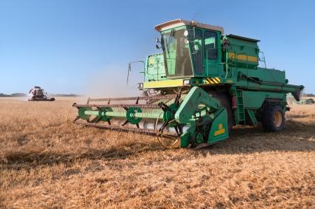 cosechadora: Máquina segadora en el campo de trigo