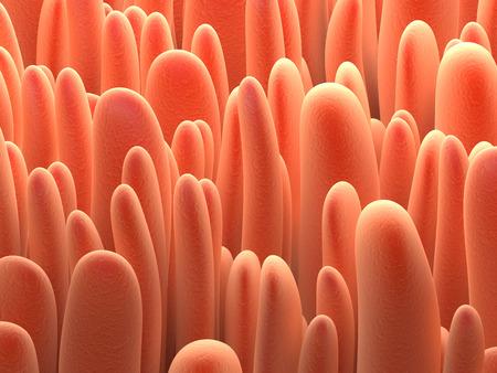 biologia: Biología fondo anatomía. Ilustración de las vellosidades de colon. Foto de archivo