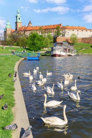 Krakow, Poland April 22, 2016: Swans near the historic Royal Wawel castle Cathedral on the Vistula.
