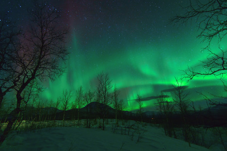 alpine zone: Aurora Borealis in Lapland northen lights phenomenon.