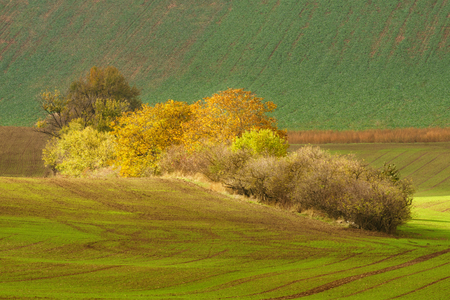 tree farming: Autumn landscape with trees and waved fields of south moravia.