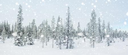 雪に覆われた北極モミの木と冬のパノラマ。