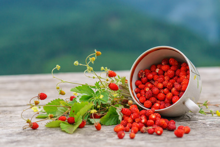 Fresh wild forest strawberry on rustic wood table with mountains on background.