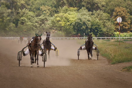Horses racing or horse riders compete.