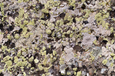 Old mountaine stone texture background dirty rock surface covered with lichen. Stok Fotoğraf