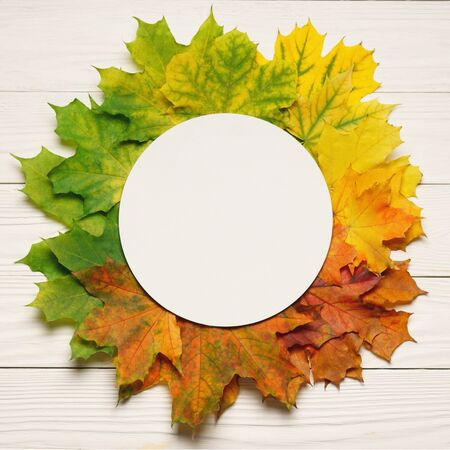 Autumn leafs colorful rainbow color gradient composition with round frame copy space.