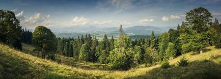 Panorama of summer landscape with forest, sky, woods, trees and mountains in the background.