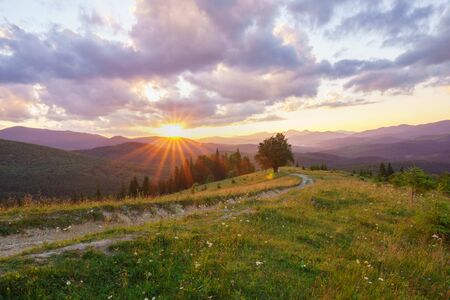 Majestic mountains landscape with lonley tree and dirt road at summer sunset.