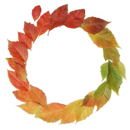 Autumn leaves rainbow color gradient circle composition isolated on white. Stok Fotoğraf