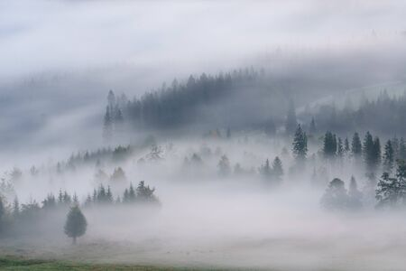 Foggy misty landscape with fir forest in hills.