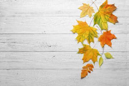 Autumn leaves on vintage white wood background.