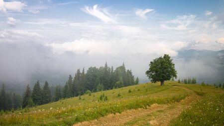 Majestic landscape with fog, lonley tree, dirt road and fir forest in mountains. Stok Fotoğraf