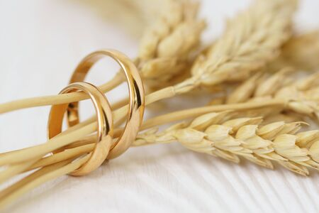 Wedding rings with wheat ears on white wood background. Stok Fotoğraf