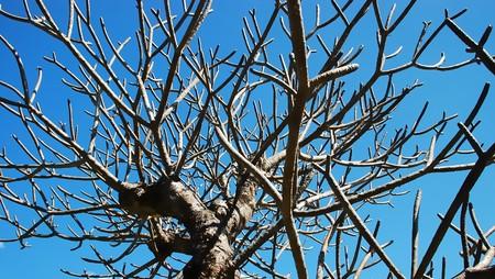 tree dry
