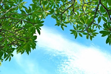 the sky under the tree Stock Photo