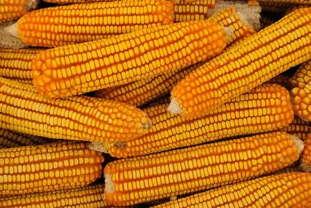corn stack Stock Photo