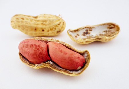 earthnut: Peanuts with white background