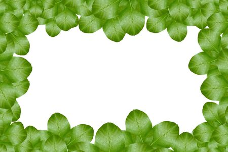 Green leaf on white background Stock Photo