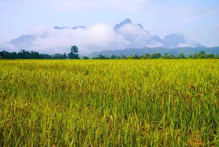 Rice field in Vang Vieng, Laos Foto de archivo