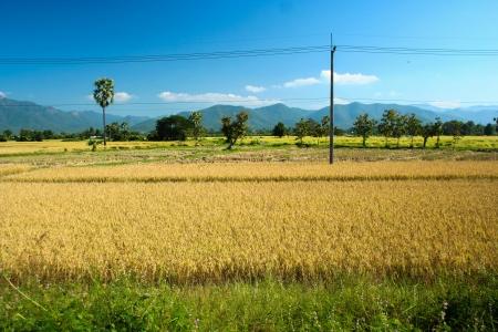 lanscape: Sankhampang Chiang Mai Agriculture lanscape