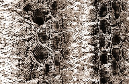 Animal orginal snake skin surface pattern