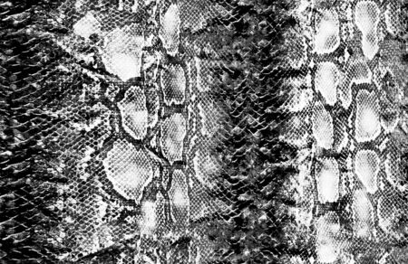 Animal snake skin and surface pattern