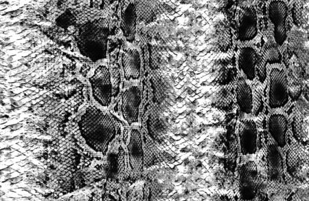 Animal snake skin surface pattern
