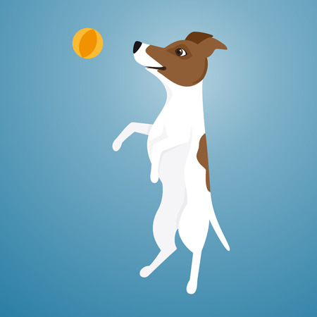 jack russel: Vector illustration of Jack Russel Terrier jumping for ball.