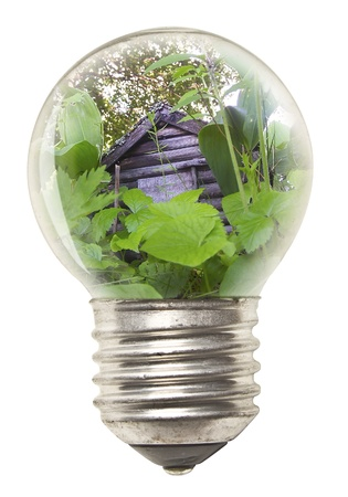 Ecological Concept - Bulb