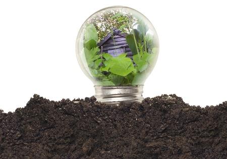 Ecological Bulb Stock Photo - 12917971