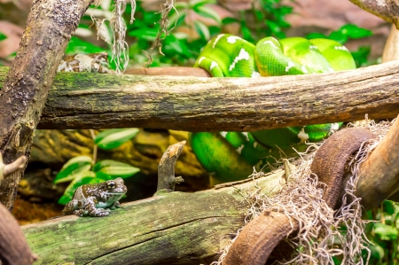 Frogs and a snake Stock Photo