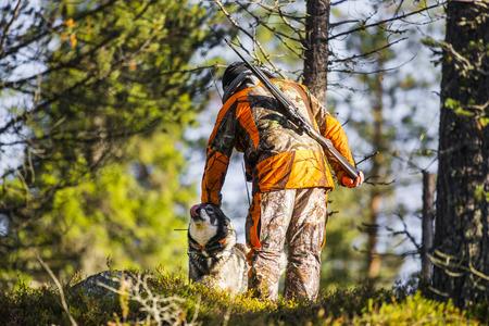 Swedish Moosehound in the fall hunting season