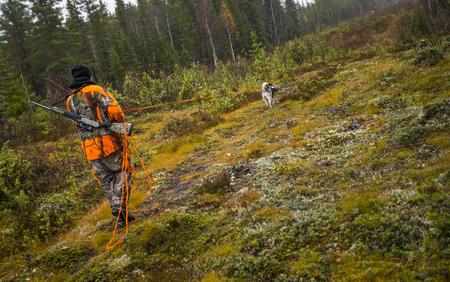 Zweedse Moosehound - jachtseizoen