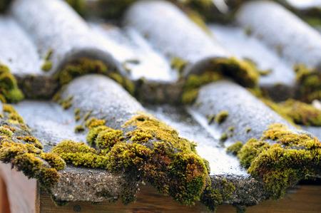 Vegetable foam on a tiled roof Banque d'images