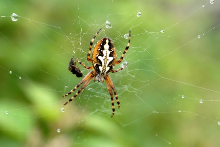 The spider in his web