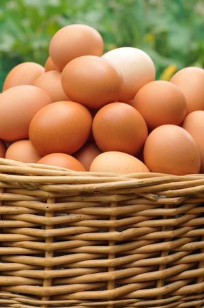 Closeup on a basket of eggs