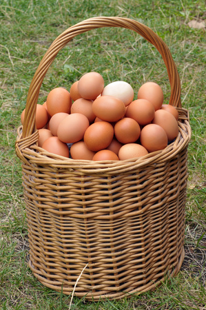 The basket of eggs on the grass